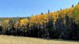 Prelisting Announcement – Jemez Mountain Cabin