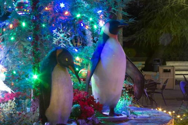 fresno-zoo-lights-christmas