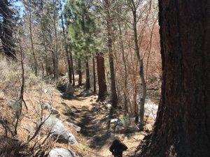 Rock Creek Trail Mammoth Lakes
