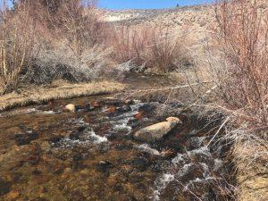 Lower Rock Creek, Eastern Sierras