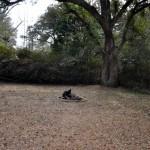backyard at 1507 Camp Road