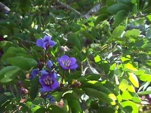 lv2flowers