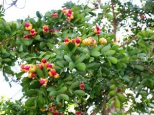 lvberries