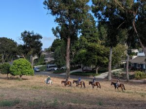 Palos Verdes Estates horse property and trail