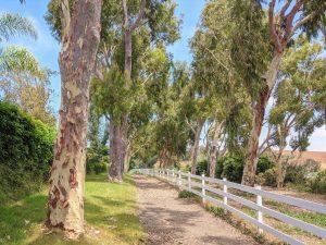 Palos Verdes horse trail