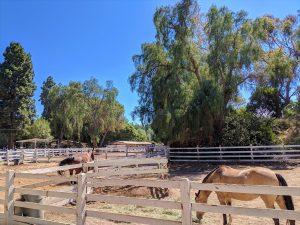 Rolling Hills Estates stables