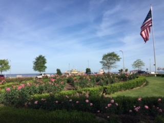Fairhope Rose Garden