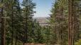 11102 S Harvard Rd, Rockford WA 99030: Amazing Treed Parcel!