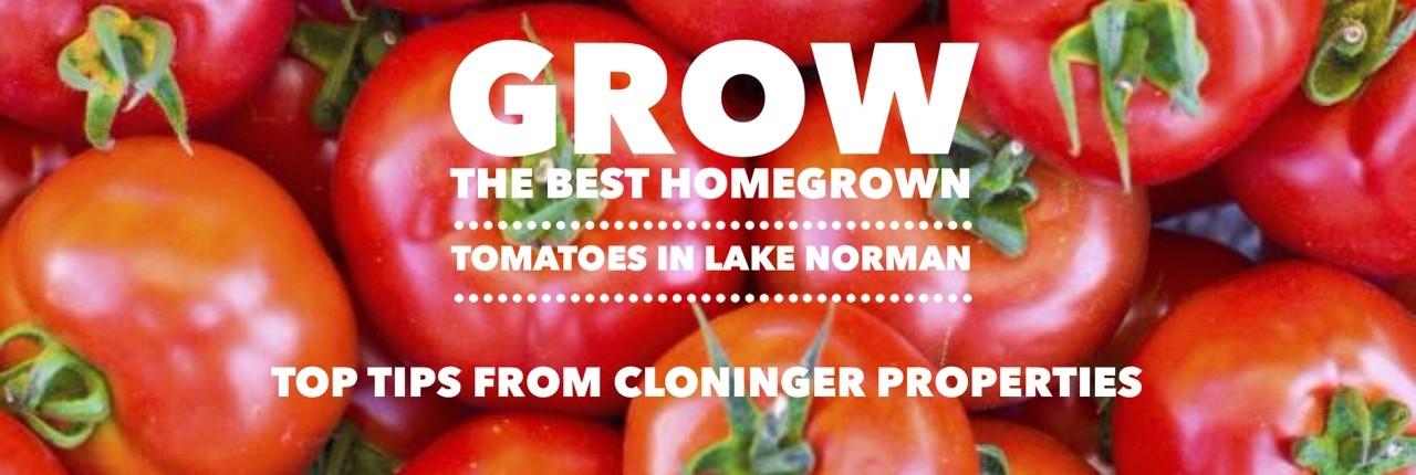 tomatoes-1280x430