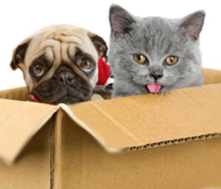 Moving pets