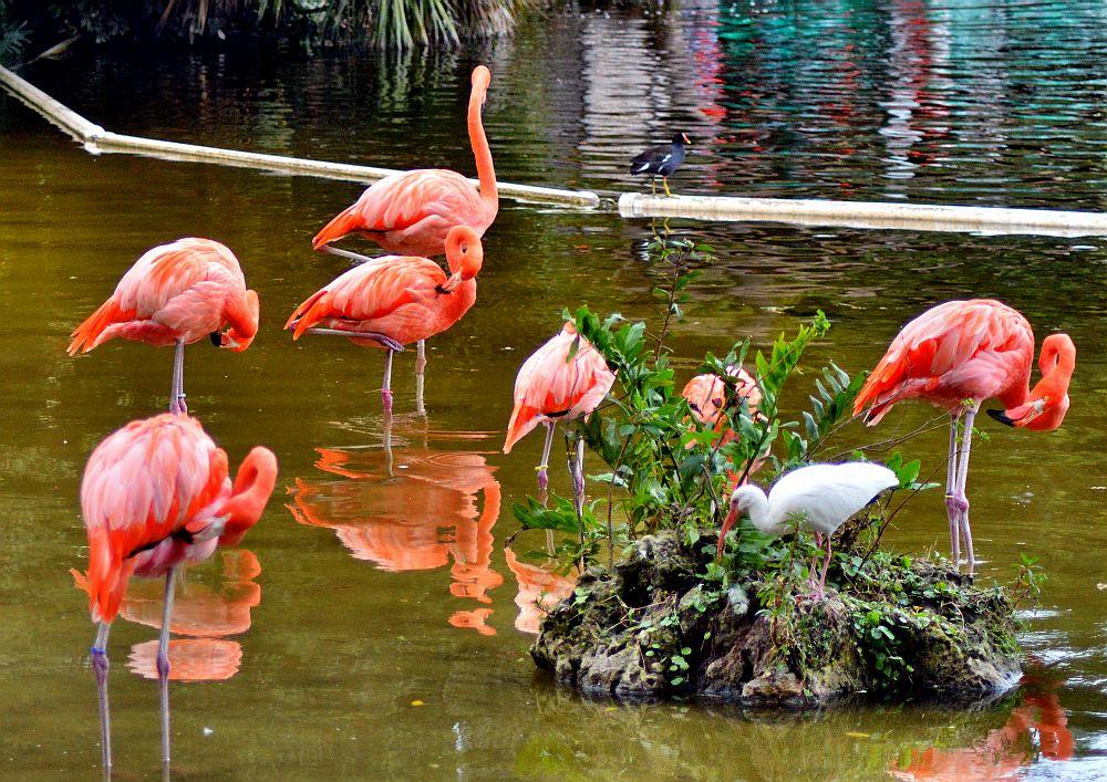 Floridian Flamingos