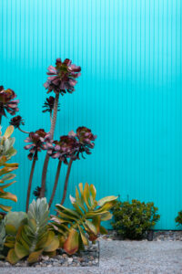 Eichler Home | Fairhaven | Mid-Century Modern Design | Kelly Laule