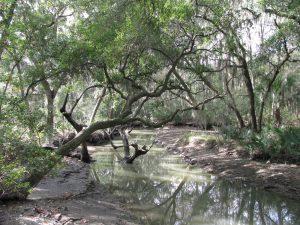 Rose Dhu Creek Nature Trail