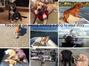 National Dog Day Blog Image1