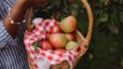 2021 Top Picks for Apple Picking  in the Chattanooga and North Georgia Areas