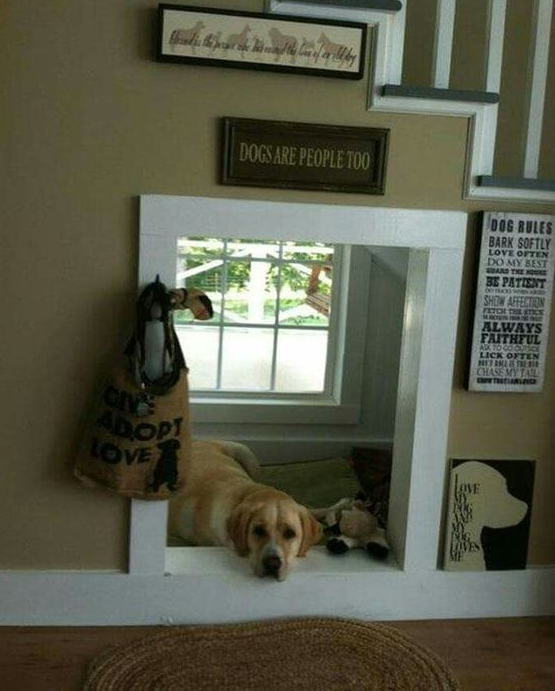 pet under the stairs cuboard