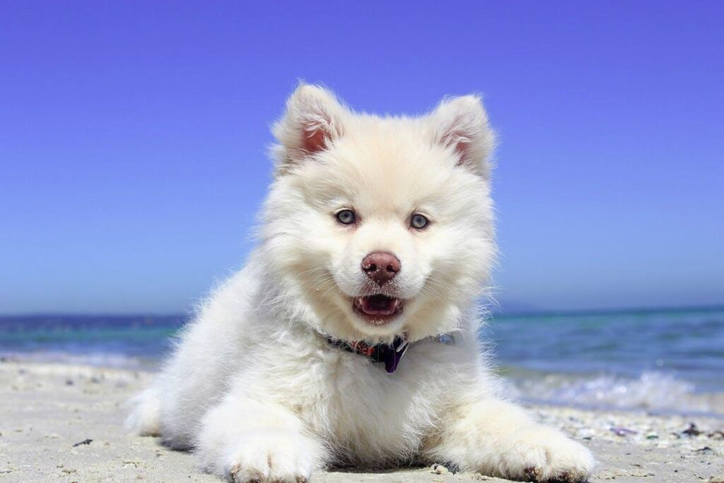 Adorable pup on the beach