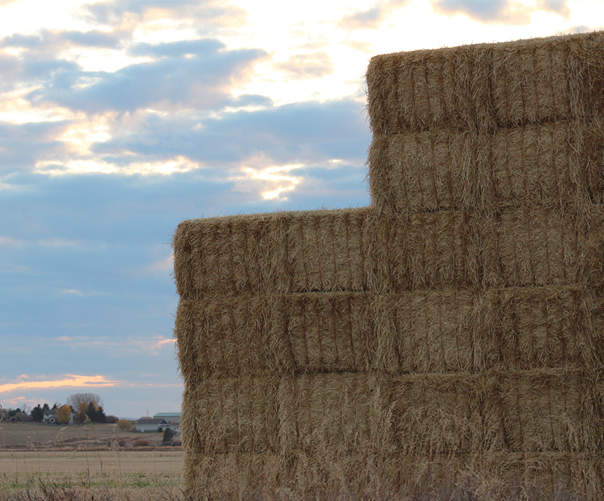 Bales of hay in the morning in Gallatin Gateway, MT.