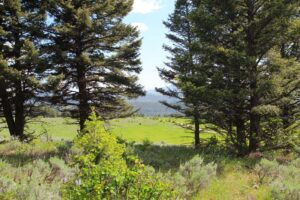Welcome to Lot #4 Bridger Woods outside of Bozeman MT