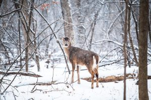 Wonderful wildlife in Idaho