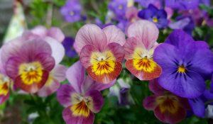 Come find the Idaho Botanical Garden!