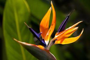 Garden Flowers found in Idaho