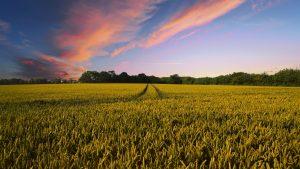 Farming in Idaho is big business
