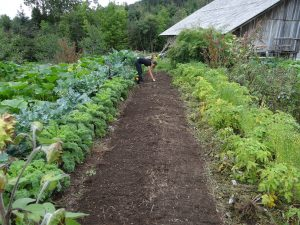 What to do to get your Idaho garden started