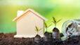 house, plants, money