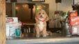 Pet Friendly Places Around LKN!