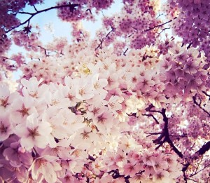 Spring__by_loLO_o