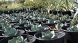 Landscaping Tips for the Desert Gardener