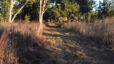 5 Best Walking Trails in Gainesville