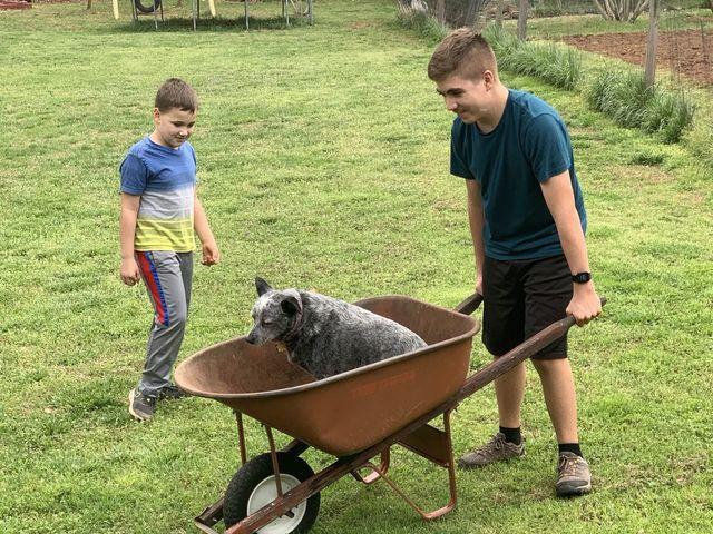 Helping in the yard