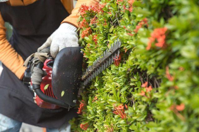 trim hedges