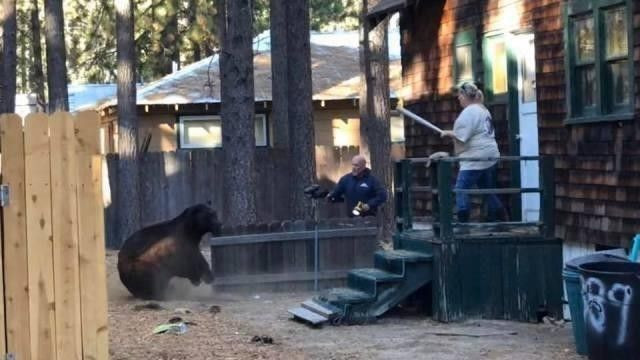 South Lake Tahoe CA listing with bear