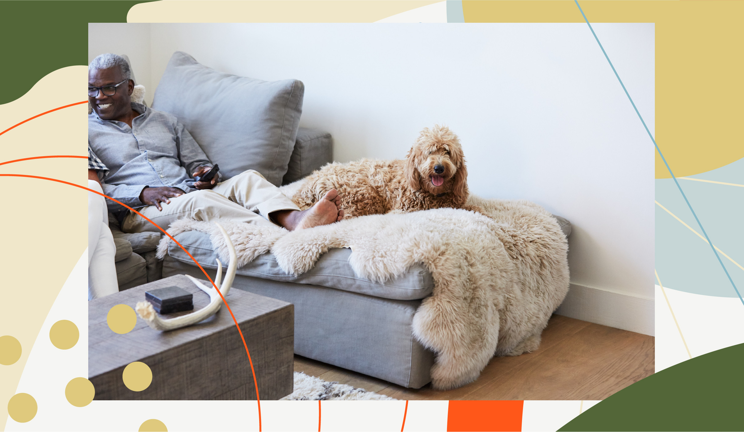 dog relaxing on cozy couch