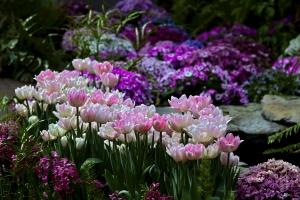 tulips-spring-garden--1442978-m