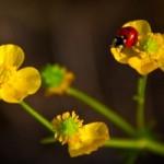 lady-bug-1426494-m
