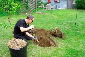 new-homeowners-need-know-plant-tree_6f05cbd82c97a02f0a747e552d990f2d_3x2_jpg_600x400_q85