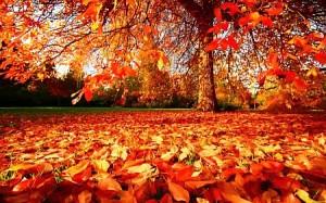 tree_leaves