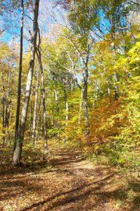 walk the trails in Pond Mills