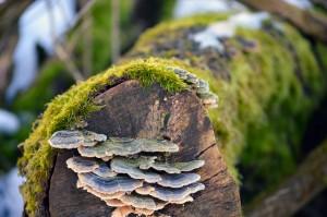 Seattle Moss