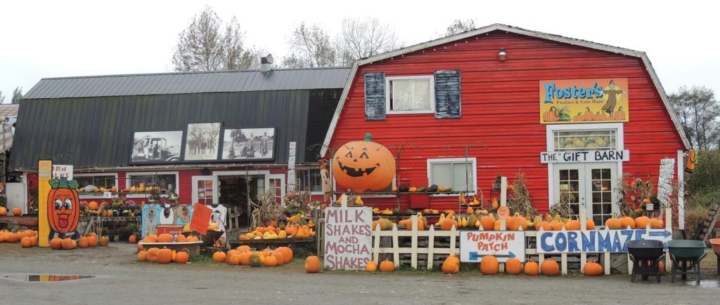 fosters pumpkin patch arlington