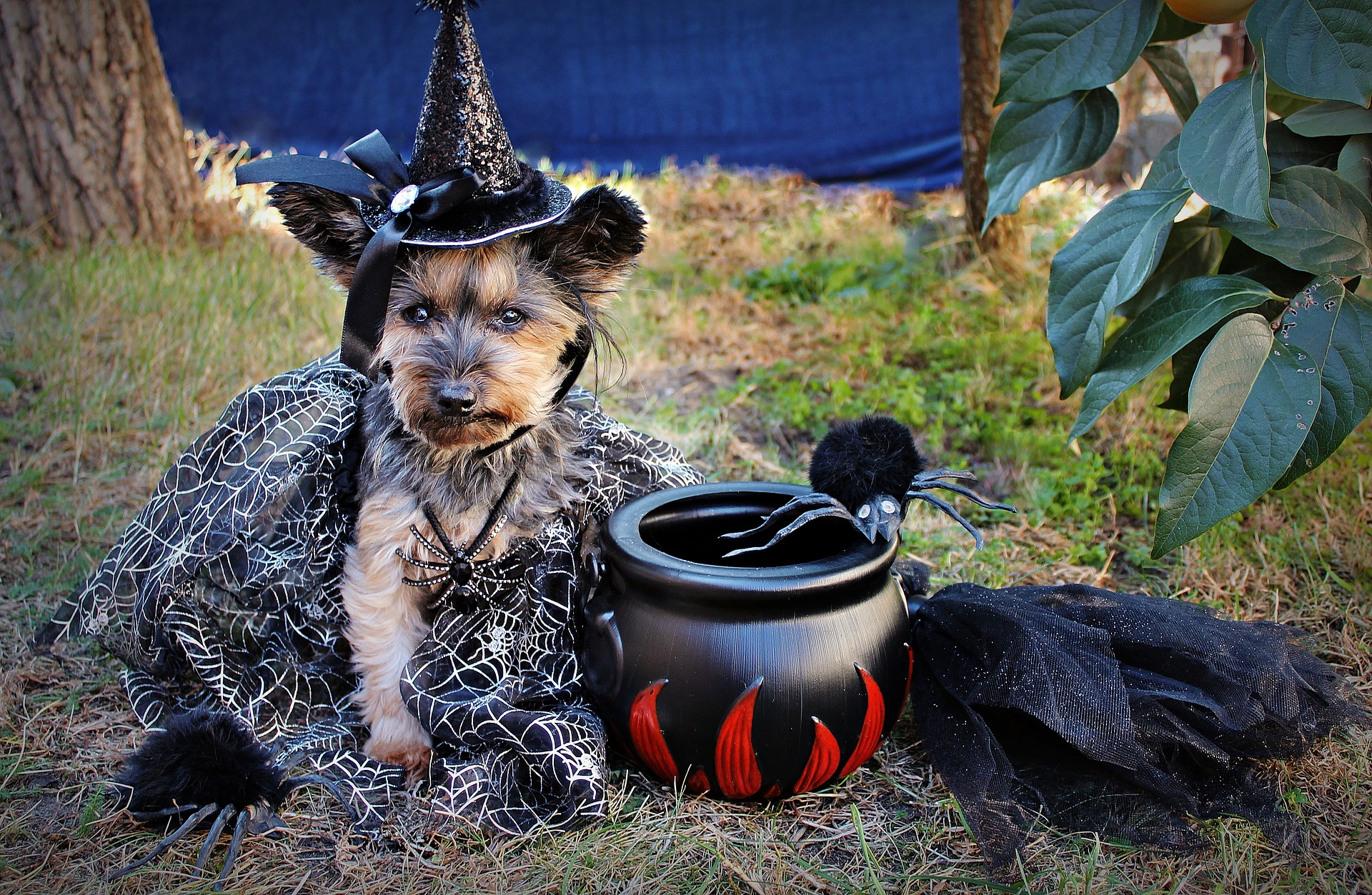Dog Dressed as a Witch for Halloween