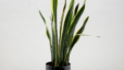 According to NASA, Indoor Plants Improve Air Quality! Here's What Homeowners Need to Know