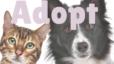 Adopt a Pet in Southern Utah