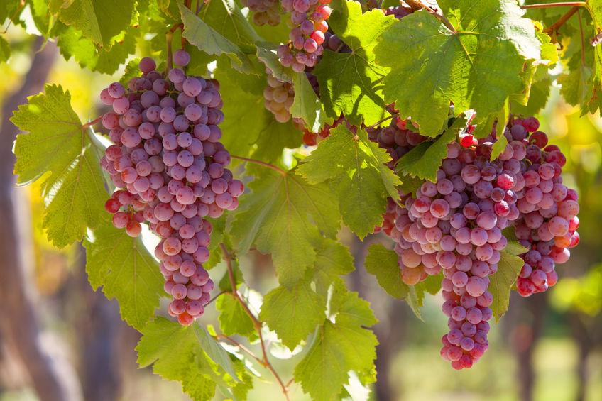 Truro-vineyard-tour