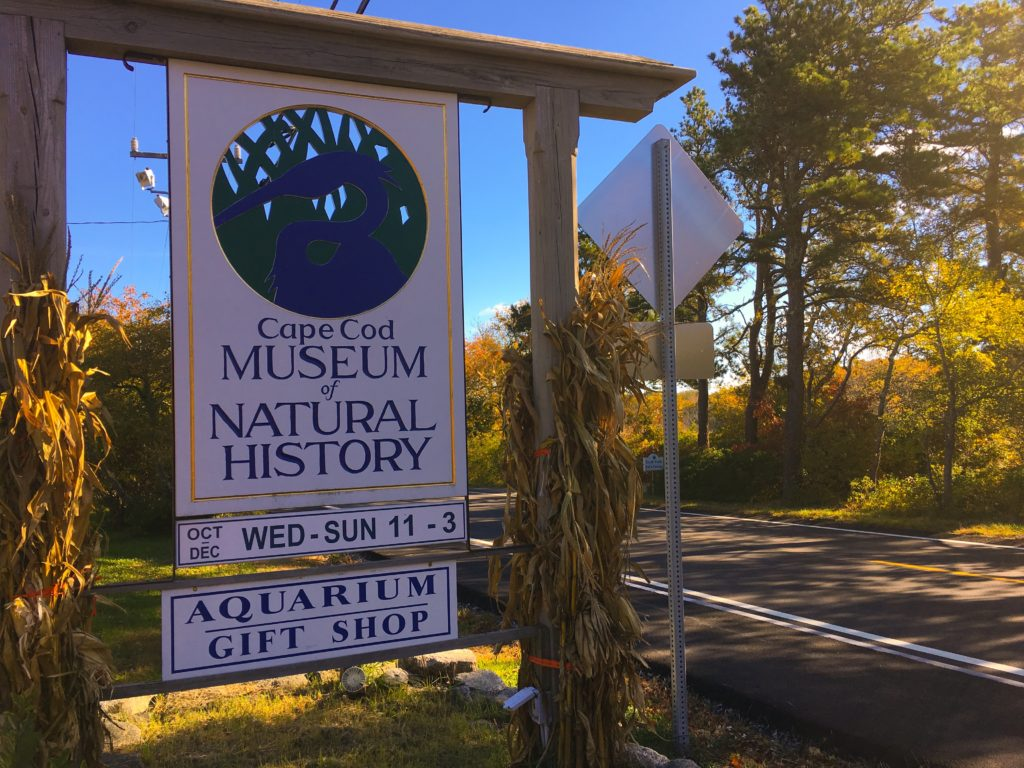 Cape-Cod-Museum-Of-Natural-History