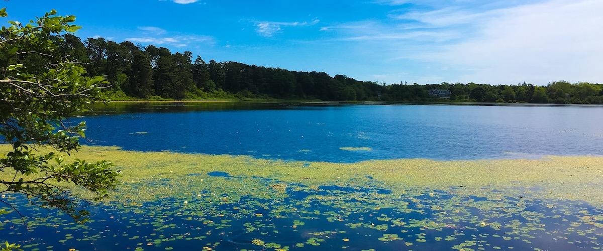 Brewster Cobbs Pond